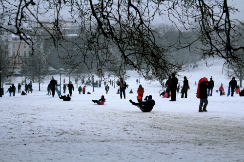 Snow still causing havoc in the UK. Here's the sledging scene on Primrose Hill yesterday (by Dexters Lab) More here