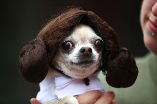 beoti:  ahhhh dogs in cosplay!  more here  This is too hilarious not to reblog; p