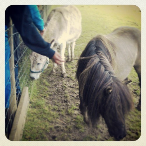 My #pony #dofe #farm #trip