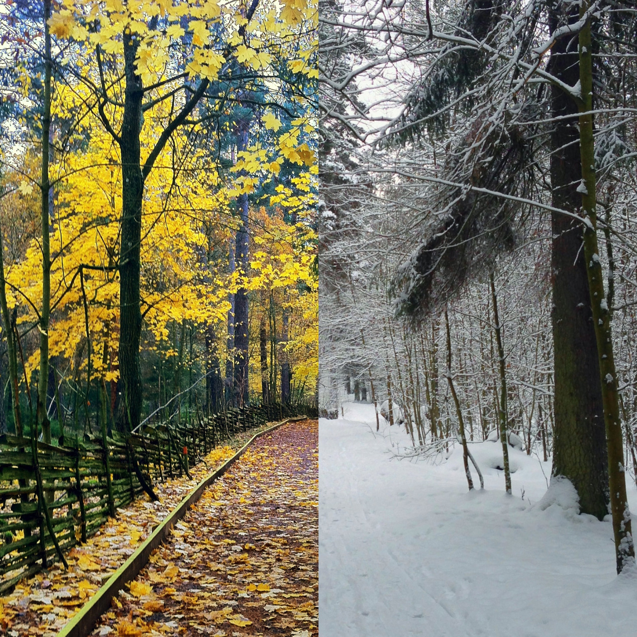 Same place different seasons