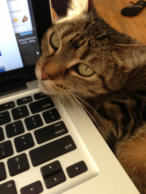 Lola wants to internets too. #catlady.