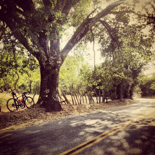 ridebyshooting:  Peanut Butter takes a shady break on our commute home, Redwood Retreat Road, CA