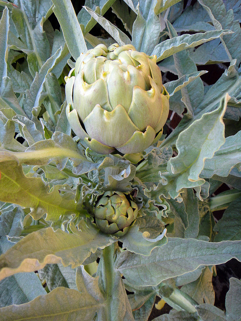 TWiNS!!!!! on Flickr.Via Flickr: I'mma be a DOUBLE artichoke grandma!!!!!1