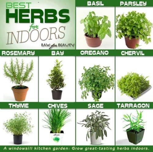 herbs herbal tea indoor plants herb garden herbal healing growing, Beautiful flower