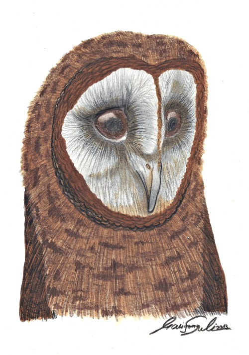 'Lovely Owl' by Marigona Suli