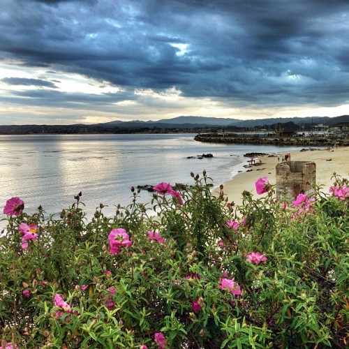Flowers by the shore #WHPflowerpower #latergram  (at San Carlos Beach)