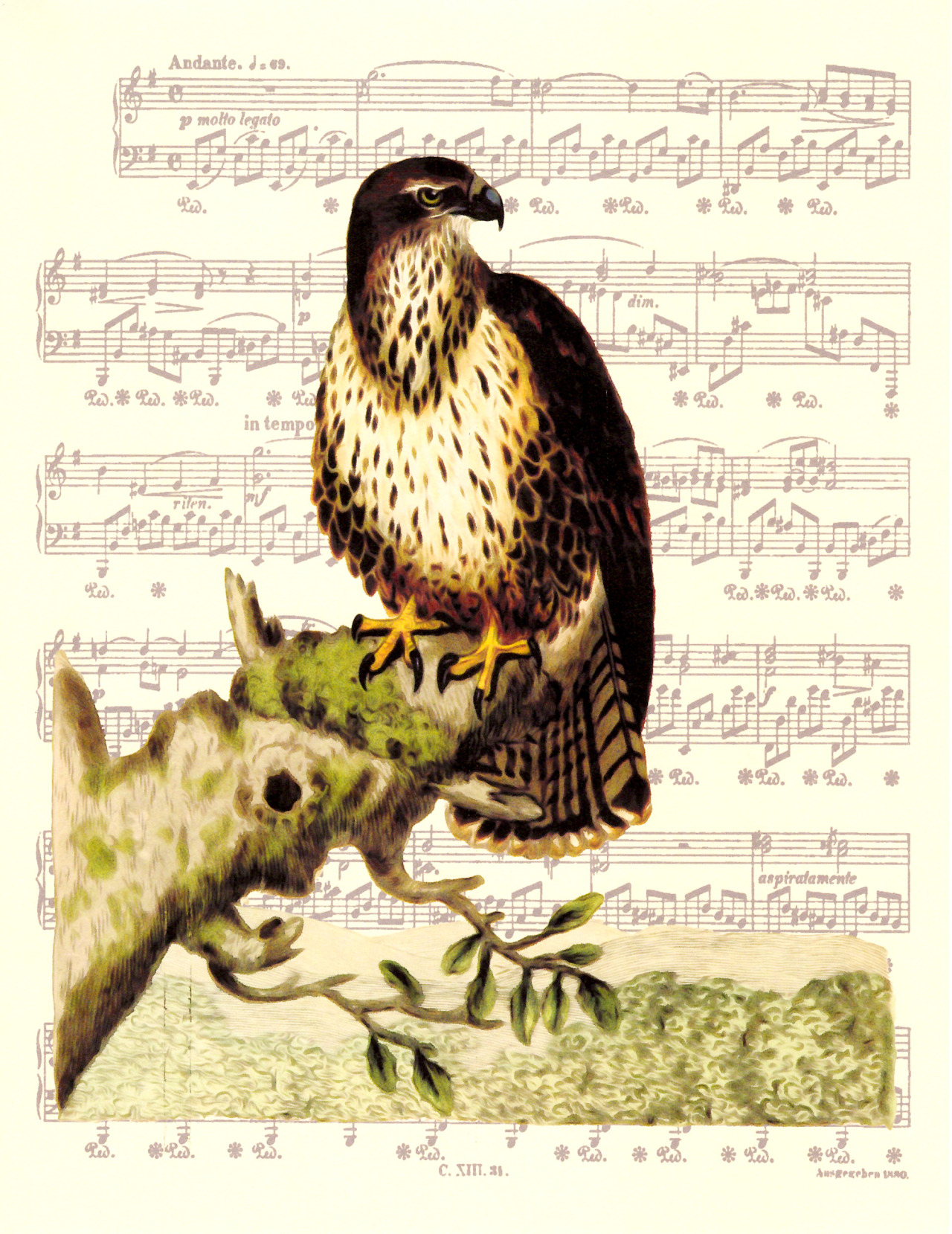 Sheet Music Art Prints — Falcon Victorian Era Print (original 1800\'s...