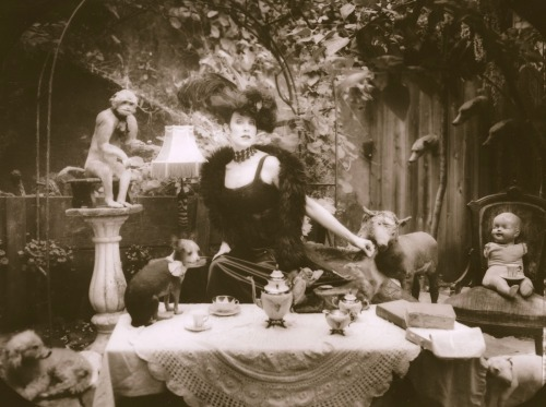 les-sources-du-nil:  Michael Garlington Jill Tracy - Taxidermy Tea Party
