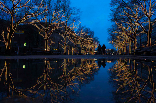 2012 in photos: Trees decorated with Christmas lights are reflected in a puddle as people walk along the Unter den Linden promenade at dusk in Berlin on Nov. 28. (Thomas Peter/Reuters)