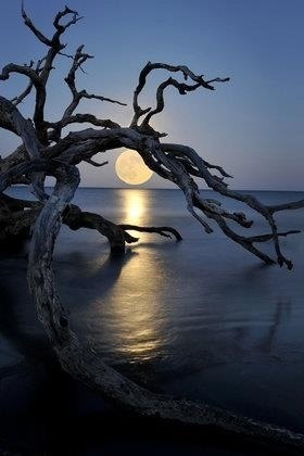 themagicfarawayttree:  moon rising over ocean