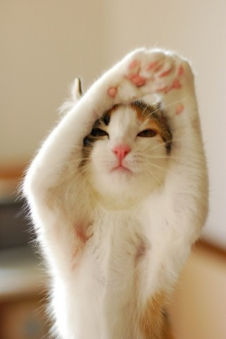 hellogiggles:  11 CATS DOING YOGAby Eliza Hurwitz http://bit.ly/13O9orU  For my sister