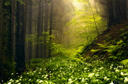 allthingseurope:  A forest in Switzerland (by  Robin Halioua)