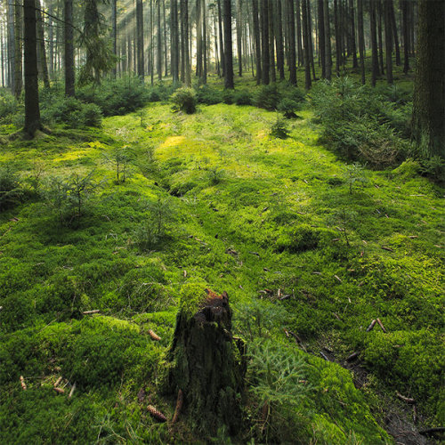 luppula-gid:  green carpet by *indojo
