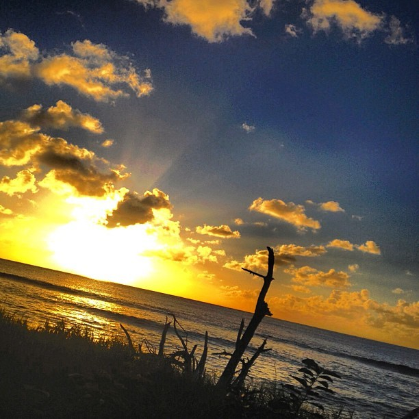 I find beauty in the simplest things #beach #sunset #barbados #instagramhub #igers #igaaddict #webstagram #instamood #instahub