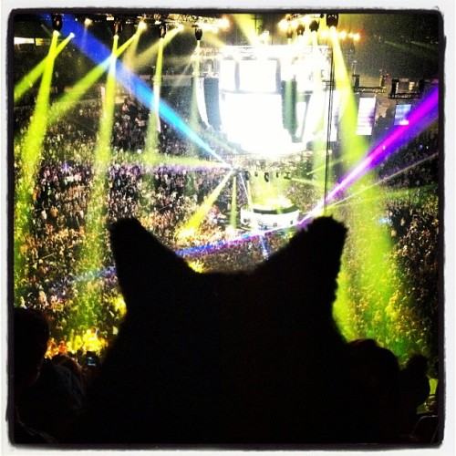Rocking out at the Bassnectar concert!! Happy New Year, love DJ =^.^=!!