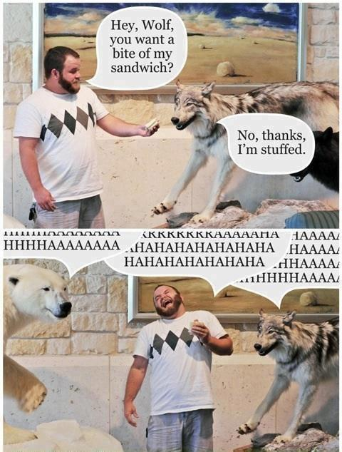 Hey wolf, do you want a bite of my sandwich?