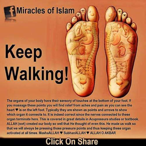 cnihayaaqo:  Keep Walking. Miracles of Islam.