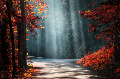 ethereo:  Lights in the Woods ( BLOAS Meven on 500px )