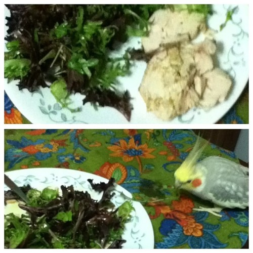 #paleo meal 3: chicken and #plants. Oh and the silly #tiel who started foraging the plants. #aww  #spoiled #birdstagram