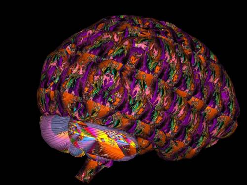 "neurosciencestuff:  The Fractal Nature of the Brain: EEG Data Suggests That the Brain Functions as a ""Quantum Computer"" in 5-8 Dimensions The brain has been traditionally viewed as a deterministic machine where certain inputs give rise to certain outputs. However, there is a growing body of work that suggests this is not the case. The high importance of initial inputs suggests that the brain may be working in the realms of chaos, with small changes in initial inputs leading to the production of strange attractors. This may also be reflected in the physical structure of the brain which may also be fractal. EEG data is a good place to look for the underlying patterns of chaos in the brain since it samples many millions of neurons simultaneously. Several studies have arrived at a fractal dimension of between 5 and 8 for human EEG data. This suggests that the brain operates in a higher dimension than the 4 of traditional space-time. These extra dimensions suggest that quantum gravity may play a role in generating consciousness. (Image courtesy: Kookmin University)"