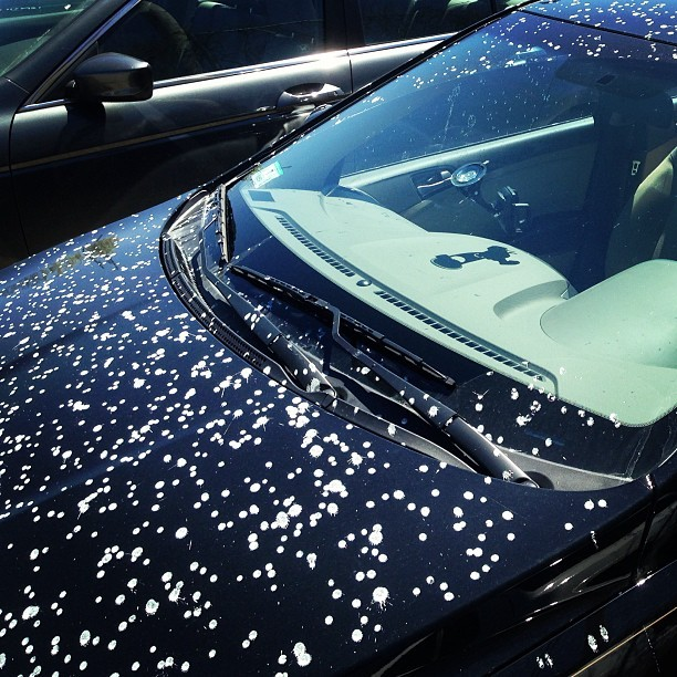 Some bird *hates* this car…
