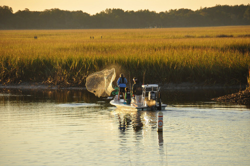 intracoastal-wanderings:  Lowcountry fishingGeorgetown, SC