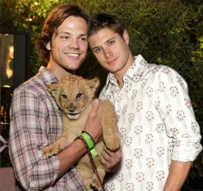 a-siren-to-remember:  and here i present to you jared padalecki and jensen ackles holding a lion cub you're welcome
