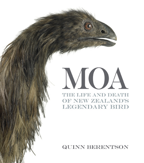 prehistoric-birds:  Moa: The Life and Death of New Zealand's Legendary Bird By Quinn Berentson     The moa were the most unusual and unique family of birds that ever lived, a clan of feathered monsters that developed in isolation for many, many millions of years. They became extinct reasonably quickly after the arrival of the Maori, and were a distant memory by the time European explorers arrived. So the discovery and identification of their bones in the 1840s was a worldwide sensation, claimed by many to be the zoological find of the century. This book begins by recounting the story of discovery, which was characterised by an unbelievable amount of controversy and intrigue. Since then there has been an unbroken chain of new discoveries, culminating with intriguing revelations in recent years about the moa's biology, that have come to light through DNA testing and radio-dating. This is a fascinating and important book that richly recounts the life and death of our strangest bird. Packed with a fantastic range of illustrations, Moa fills an important gap in our natural history literature, a popular but serious book on this national icon.        (Find out more —> Craig Potton Publishing)