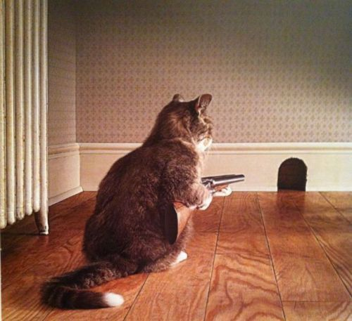 "funnyordie:  ""Now … I wait."""