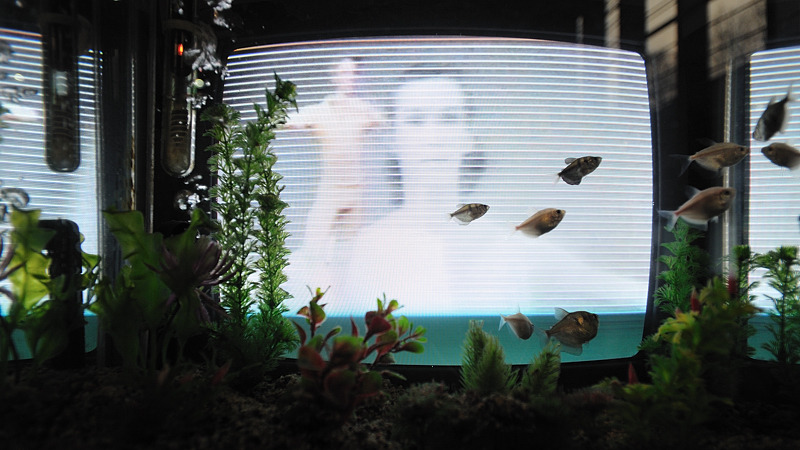 Nam June Paik — Video-fish (Poissons-vidéo), 1979-92