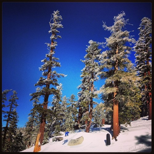 @thano_ellis blending into the trees. Look for his shadow. ;) @skiheavenly #snowboarding #snow #sierras #tahoe #trees #heavenly #laketahoe #southlaketahoe #california