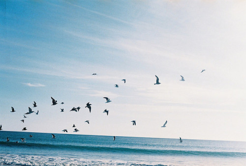 oceanux:  birds1 by Drew Point 0 on Flickr.