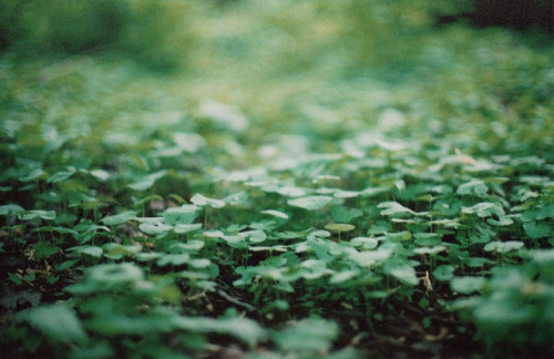 green by daelimae on Flickr.
