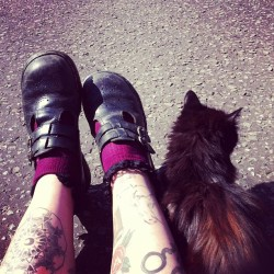Kitty friends! #dms #docmartens #mybodymod #tattoo #ink #cat #sun