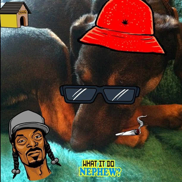 #Snoopify'ed Harry 🐶