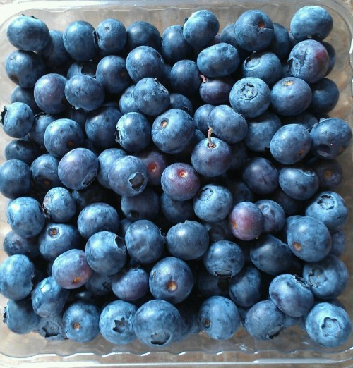 itsperfucked:  blueberries are awesome