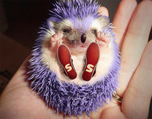 obviouswinner:  OMG CUTE Sonic the Hedgehog IRL