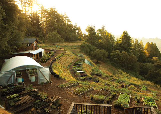 useyermanners:  farm-to-table, all in one restaurant. life goal.