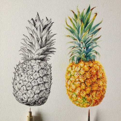 pineapple drawing | Tumblr