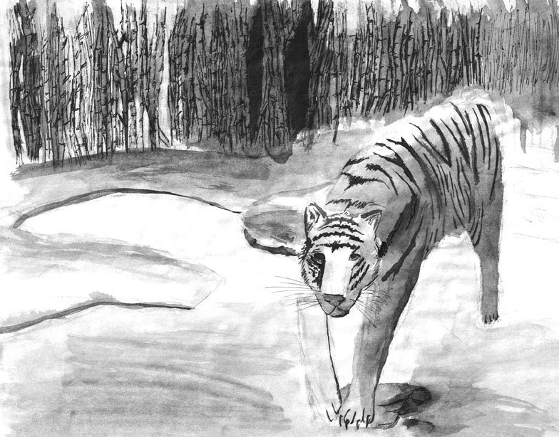 Tiger done from a pen and ink workshop.