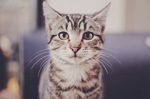 serendipity-precious:  kitty portrait by Lisa | goodknits on Flickr.
