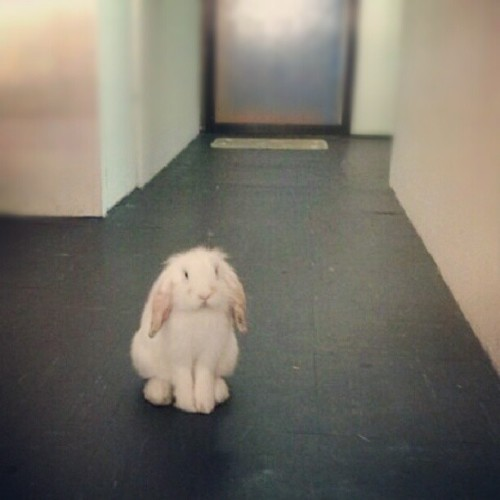tinana:  Whatcha doing, bunny #bongming?  NO~THING…