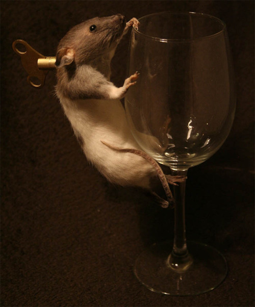 Taxidermy Clockwork rat for sale on ebay: http://cgi.ebay.co.uk/ws/eBayISAPI.dll?ViewItem&item=181117835144