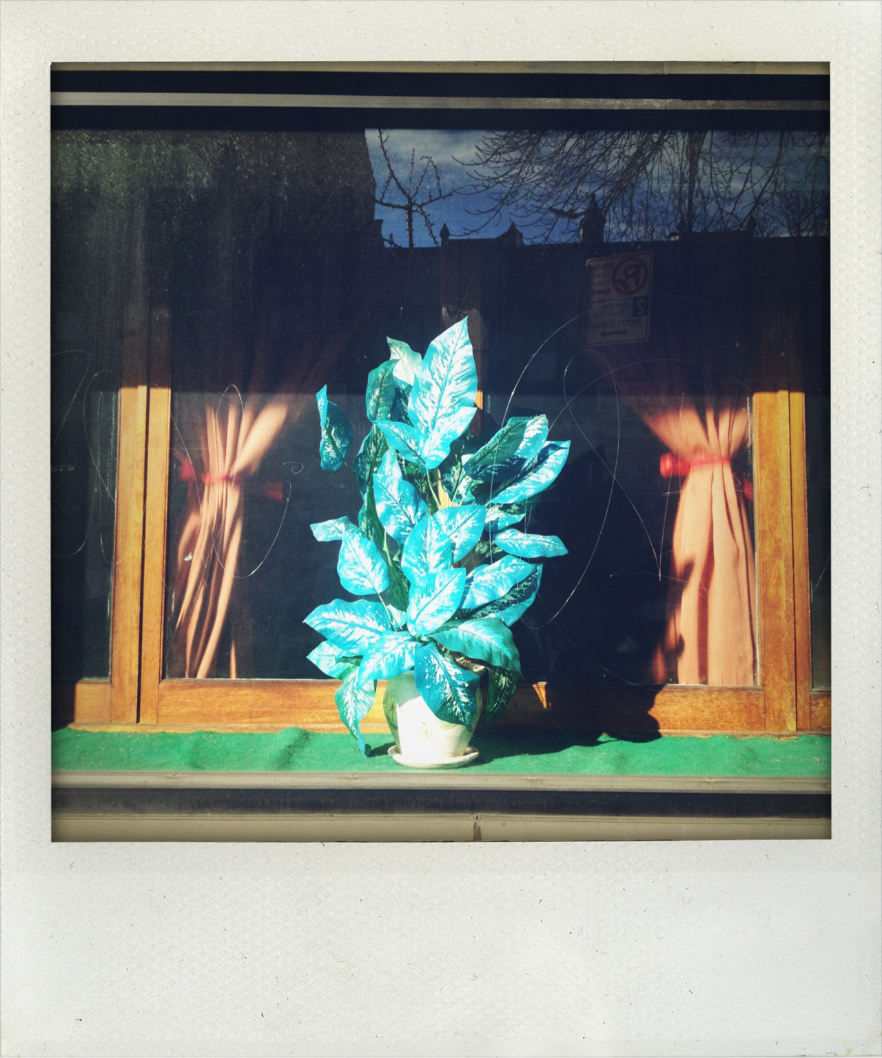 Artificial Plant in Queens Storefront, (faded). 2013