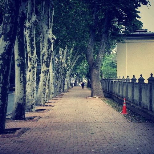 #dolmabahce #istanbul #sidewalk #trees #road #perspective #cone #iconethereforiam #instagramhub #allshots_ #gramoftheday #gotd #ampt #street #streetphoto #streetphotography #iphonesia #iphoneonly #iphonography  (at Yürüyüş Yolu)