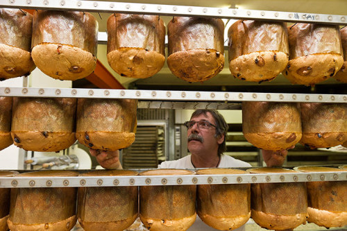 Lamone, Switzerland: Tullio Canonica checks on suspended panettone loaves in his bakery Photograph: Karl Mathis/EPA