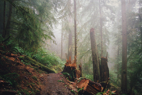 through the mist, though the woods by manyfires on Flickr.