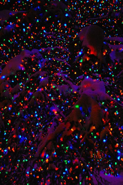 Christmas snow Christmas tree christmas lights snowflake colored lights