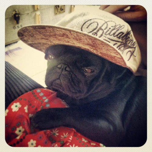 Wat up!? #pug #pugstagram #cool #dog #dogsinhats #cute #billabong