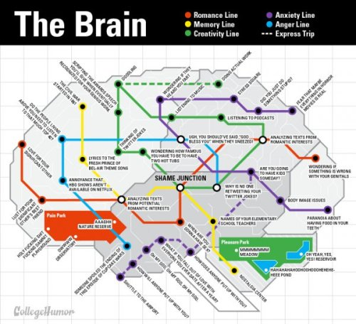 rosscott:  blogwell:  collegehumor:  Subway Map of Your Brain Stand clear of the closing synapses.   This is insanely accurate. Props to Hallie for concept, and Ross for design.   I did the design for this!